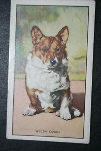Welsh Corgi   Original 1936 Vintage Illustrated Small Card