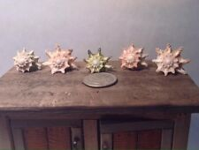 Dollhouse Miniature Spiny Star Astraea Shell Home Decor 1:12 or 1:6 Scale