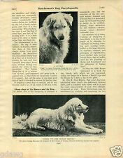 1930 Book Plate Dog Print Kuvasz Komondor Janos Von Der Blauen Grotte Glaser