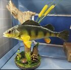 Yellow Perch Fish taxidermy real skin mount genuine drift wood river rock desk