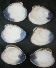 "Lot of 6 Chesapeake Bay Purple Lip Clam Half Shells 4 1/2"" XXL Chowders"