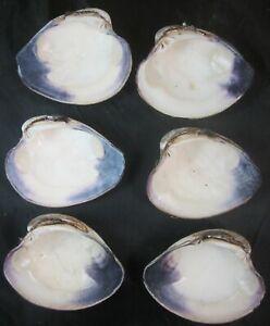 "Lot of 6 Chesapeake Bay Purple Lip Clam Half Shells 4 1/2"" XXL Chowders"