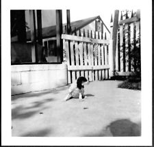 Vintage Photograph '50S English Setter Dog Wilmar Kennels Cincinnati Ohio Photo