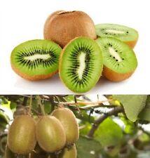 FD849 KIWI FRUIT Actinidia Vine Seeds Grow Delicious Healthy Fruit Seeds 10PC :)