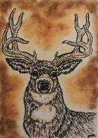 ACEO White Tailed Deer Buck Animal Original Artwork Art Card Signed Artist
