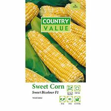 Corn Seeds gold kernels,vegetable & Plants Seeds,gardens Easy Growing.australia