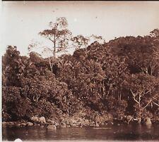 Hải Phòng Forêt Viêt Nam Photo E5 Plaque de verre Stereo Vintage ca 1925