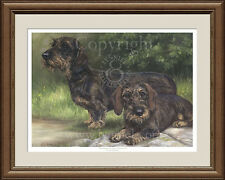 WIRE HAIRED DACHSHUNDS limted edition dog print by Lynn Paterson