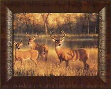 SHADOW TIME by Nancy Glazier FRAMED PRINT PICTURE 12x15 Deer Buck Whitetail