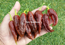 Chocolate Bhut Jolokia Chilli: 10 Rare Seeds - One of the Hottest in the World