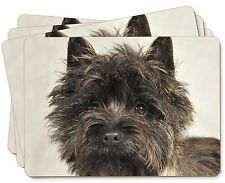 Brindle Cairn Terrier Dog Picture Placemats in Gift Box, AT-CT2P