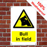 Bull in field sign or sticker Health and safety Notices COUN0012 weatherproof