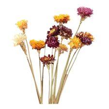 1X(20Pcs Dried Flower Daisy Natural Artificial Flower Colorful Chrysanthemum K4)
