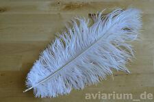Schöne Straußenfeder Straußenfedern Federn 2 Stk. 30-35 cm weiß