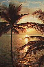 postcard   USA Florida  a florida sunset unposted