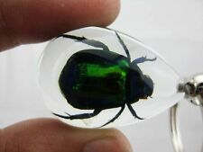 Colorful Scarab Beetle metallic shining Insect Specimen Key Ring : Clear