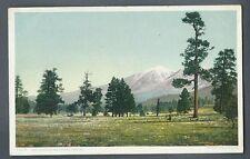 "Vintage Postcard ""San Francisco Mountains, Arizona"" Detroit Publishing Co."