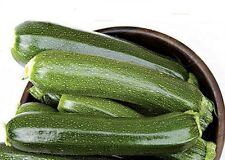 Zucchini BIO Zucchini Leila Profisorte Samen