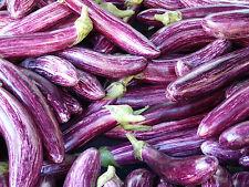 🍆 20 Samen Violett gestreifte Aubergine Tsakoniki Eierpflanze Solanum melongena