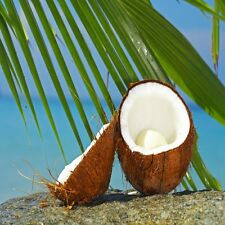 Coconut Fragrance Oil Soap & Candle Making Supplies *Free Shipping*