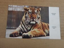 Postcard Siberian Tiger London Zoo Colour Card  unposted