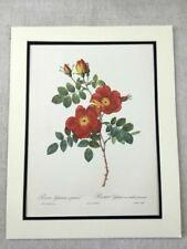 Multi-Colour Modern (1900-79) Date of Creation Botanical Art Prints