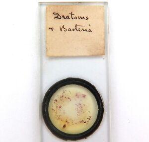 .c1887 DIATOMS & BACTERIA MICROSCOPE SLIDE.