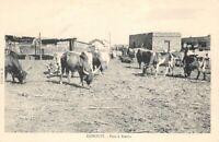 DJIBOUTI - Parc à Boeufs