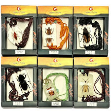 Insect Bracelet in Resin Specimen Collection Assorted 6 pcs
