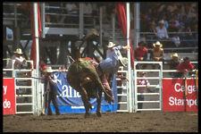 331086 Bull Riding A4 Photo Print