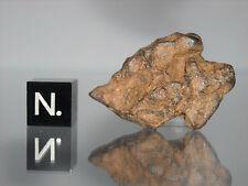 Agoudal - Imilchil IIAB iron meteorite 16.70g very nice complete stone