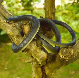 "31"" Realistic Snake Rubber Snake Lifelike Durable Garden Scary Gag Props Toys"