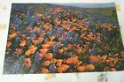 """1976 VINTAGE NOS ARGUS POSTER  21"""" X 14""""   FIELD OF FLOWERS   USA"""