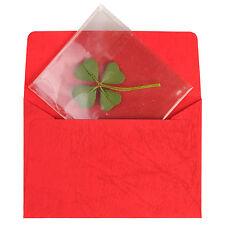 Real 4 Four-Leaf Clover Pressed Flower Stuff DIY Crafts Handmade Art Materials M