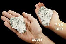 "Green Tree Agate 3"" 7-14 Oz Heart Chakra Healing Stone Rough Rocks Raw Minerals"