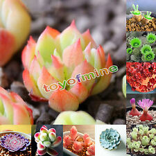 Semillas 80Pcs Succulents Planta Potted Garden Home