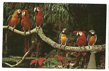Whispering Parrot Jungle Birds Miami Florida Postcard Fl Koppel Color Cards