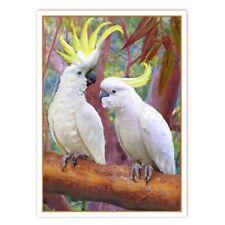 © ART - sulphur crested white cockatoo Original wildlife Bird Artist Print by Di