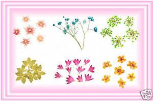 Nail Art Trockenblume Echte Trocken Blüte Blumen Set2