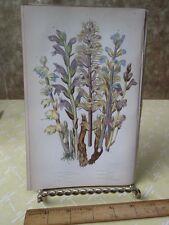 Vintage Print,RAPES,Plate149,Flowering Plants,Great Brit,Pratt