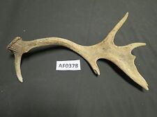 Fallow Deer Antlers Decor Wildlife Hunting in Texas AF0378