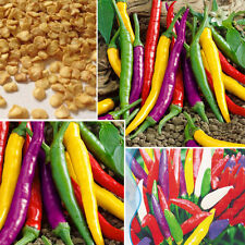 150PCS*colorful pepper seeds mixed color long chilly vegetable seeds delicious~