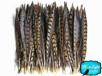 "Pheasant Feathers, 8-10"" Natural Lady Amherst Tail Feathers - 10 Pieces"