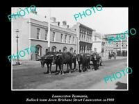OLD POSTCARD SIZE PHOTO OF LAUNCESTON TASMANIA BULLOCK TEAM IN BRISBANE St 1900