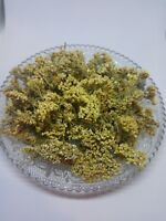 Yarrow flower bay. Achillea millefolium .Organic dried tea herb bio