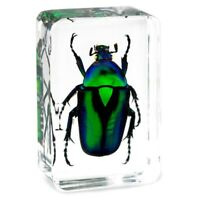 Green Emerald Chafer Beetle Insect Specimen Clear Resin Paperweight Collection