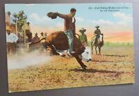 Vintage Cowboy Calf Riding for the spectators Rodeo Postcard