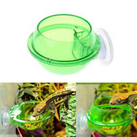 New Reptile Feeder Anti-escape Food Bowl Turtle Lizard Worm Live Food Container