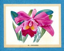 NATURAMA - Lampo 1968 - Figurina-Sticker n. 43 - ORCHIDEA -Rec