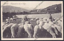 VARESE VALGANNA 22 GHIRLA - PASCOLO PASTORI PECORE LAGO Cartolina viaggiata 1930